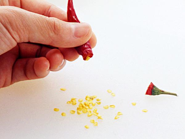 赤唐辛子のへたと種を取る