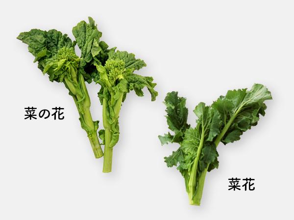 「菜の花」と「菜花」の違い
