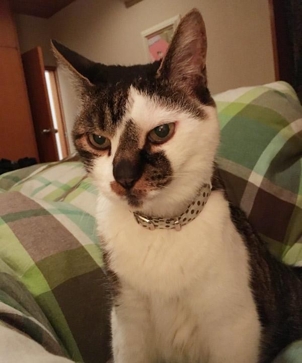 写真:井上荒野さん家の猫(不機嫌)