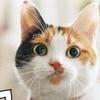 猫のいる素敵な暮らしが見える! 『うちのニャンコ。』壁掛カレンダー 2019