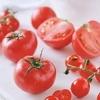 おいしく、美しく。 体にうれしい『トマト』の成分とは……?