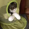 うちのニャンコ。今回のテーマは「猫の手を借りたい」