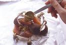 ホイル焼きを1人分ずつ包む。30cm四方に切ったアルミホイルの手前半分にサラダ油を薄く塗り、鮭、きのこを1/2量ずつのせ、カレーマヨネーズの1/2量をところどころにバランスよくのせる。ホイルの向こう側を、手前の端と合わせるように材料にかぶせ、2~3回折りたたむ。左右の端を2~3回折って、ぴったりと閉じる。
