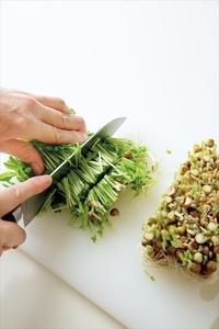 豆苗は根元を切って長さを4等分に切る。ボールにたねの材料を入れ、粘りが出るまで手で練り混ぜる