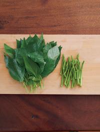 モロヘイヤは葉を摘み、葉と茎に分ける。茎は包丁がすっと入らない堅い部分を切り落とす。  【ポイント】 茎は堅く、柔らかい葉よりも熱の通りが遅いので、時間差でゆでます。そのために、まず葉と茎を分けておきましょう。